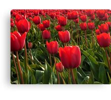 A field full Red Tulips Canvas Print