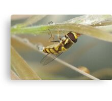 Hover Fly Canvas Print