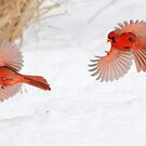 """""""Catch me if you can!"""" by Alinka"""