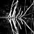 river§ by theStalker