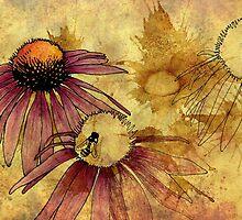 Echinacea by Barbara Glatzeder