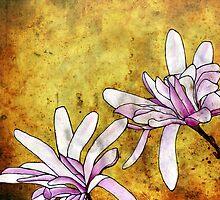 Magnolias by Barbara Glatzeder