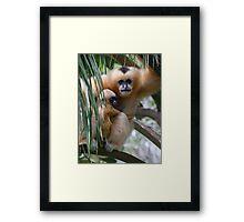 White Cheeked Gibbon and Infant Framed Print