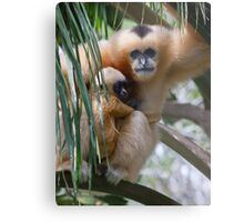 White Cheeked Gibbon and Infant Metal Print