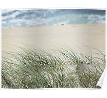 Sandy Grass Poster