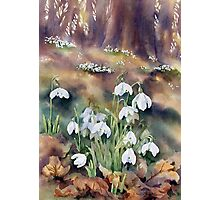 Snowdrops in the Wood Photographic Print