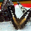 Plate Full of Wings by CatKV