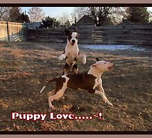 Buster and Sweetie- Fun, Fun, Fun~!!!! by Brenda Dahl