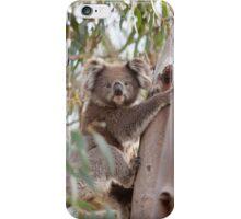 Koala Encounter iPhone Case/Skin