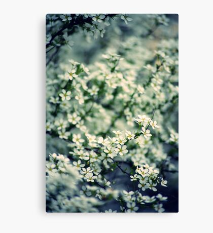 Spring lights Canvas Print