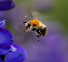 Coming in to Land by James Hennman