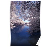 Tree Lined Water Poster
