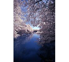Tree Lined Water Photographic Print