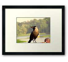 Clever Crow Framed Print