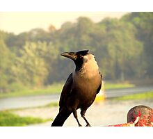 Clever Crow Photographic Print