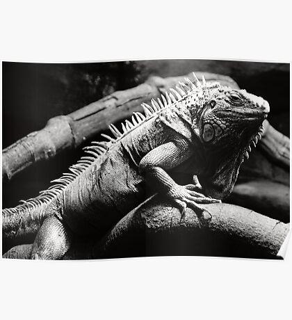 Dark iguana Poster
