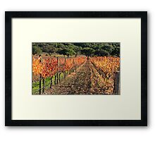 Vineyard Foliage Framed Print