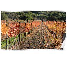 Vineyard Foliage Poster