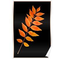 Autumn Pistachio Poster