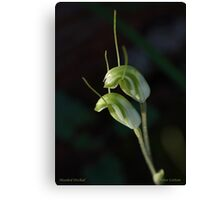 Hooded Orchid - Western Australia Canvas Print