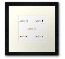 Rummy Nose Tetra Fish Framed Print