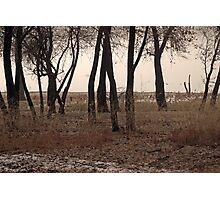 Cottonwoods 3 Photographic Print