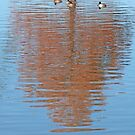 Four Ducks and an Autumn Cypress by Lisa Holmgreen