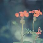 Muted Geranium by Joseph O'R.