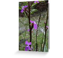 Trigger plant- the little pad on the lever swings over and dabs any visitor Greeting Card
