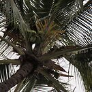 Coconut Tree by Soulmaytz