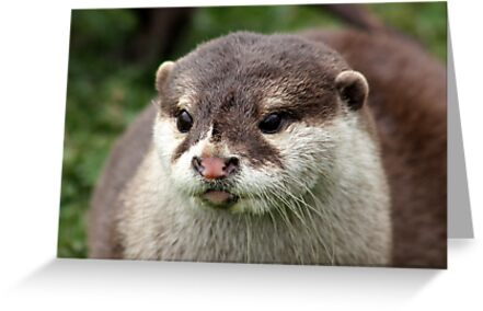 Otter by AnnDixon