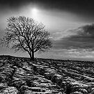 Malham Tree 02 - Yorkshire Dales, UK by ExclusivelyMono