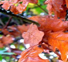 Autumn Oak  by fairytrooper