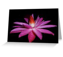 Beauty by Night. Greeting Card