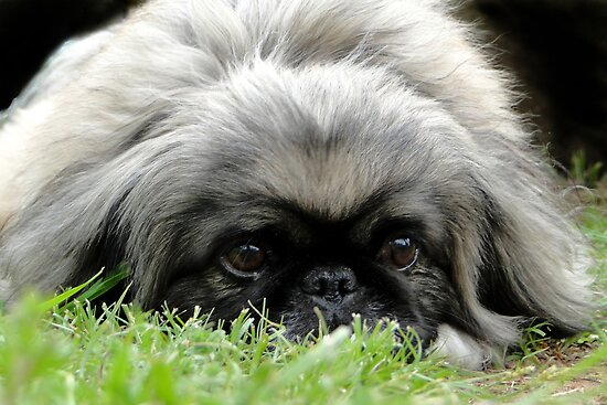 Sneak In The Grass by Carolyn  Fletcher