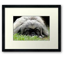 Sneak In The Grass Framed Print