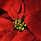 Poinsettia by Mistyarts