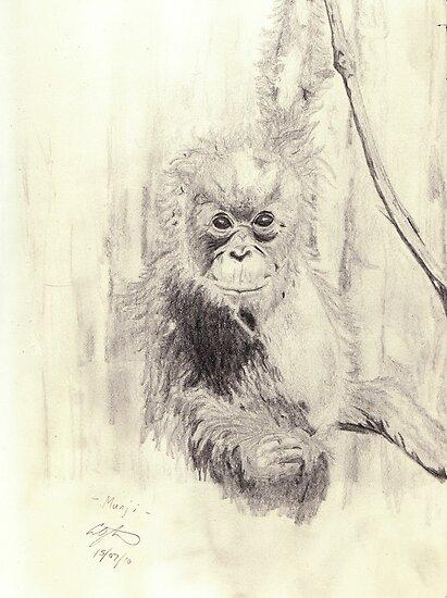 Orangutan sketch - pencil by gogston