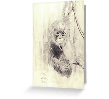Orangutan sketch - pencil Greeting Card