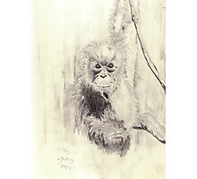Orangutan sketch - pencil Photographic Print