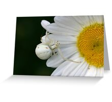 Common crab spider. Greeting Card