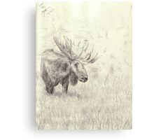 Lonely moose sketch - pencil Canvas Print