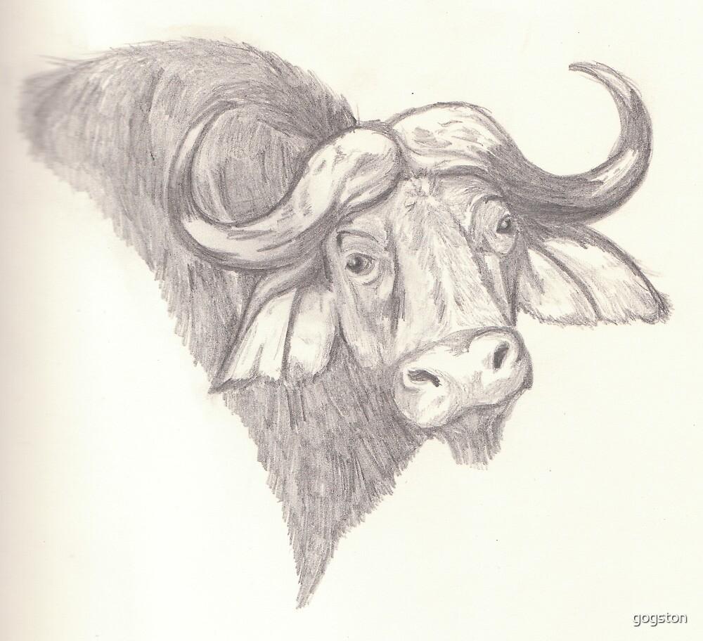 Water buffalo portrait - pencil by gogston