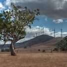 0662 Trees - old and new by DavidsArt