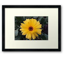 Cute one Framed Print