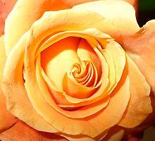 Peach Serenity by Karen Clark