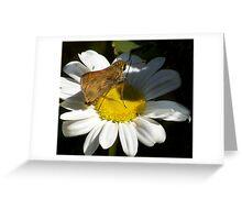 Shasta Daisy 2 Greeting Card