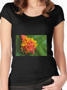 Hibiscus stamen macro Women's Fitted Scoop T-Shirt