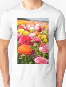 ield of multicolor cultivated Buttercup (Ranunculus) flowers T-Shirt