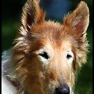 RIP Lassie Girl by AngieBanta